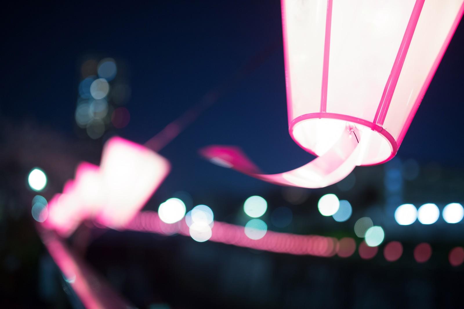 文京さくらまつり ライトアップ
