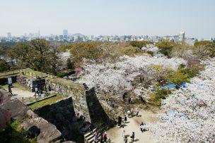 福岡城 さくらまつり