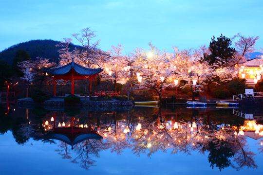 上野公園桜2018の見頃は?見どころ・宴会の場所取り・穴場まで!