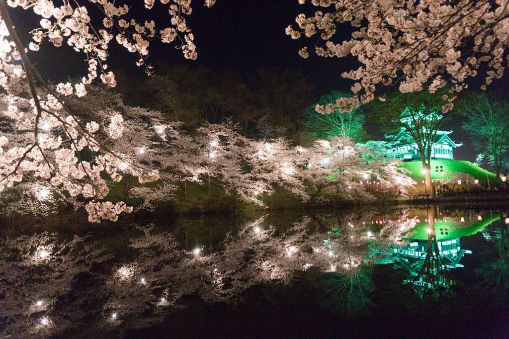 舞鶴公園の桜2018の見頃は?福岡城さくらまつりのライトアップも!